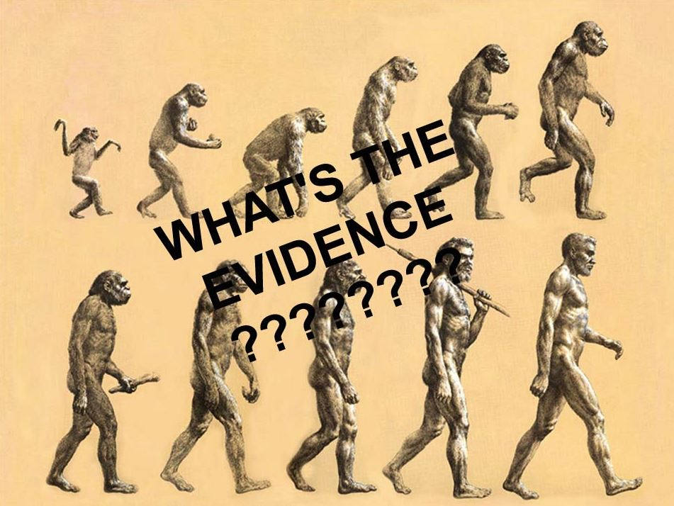 What's the evidence human evolution