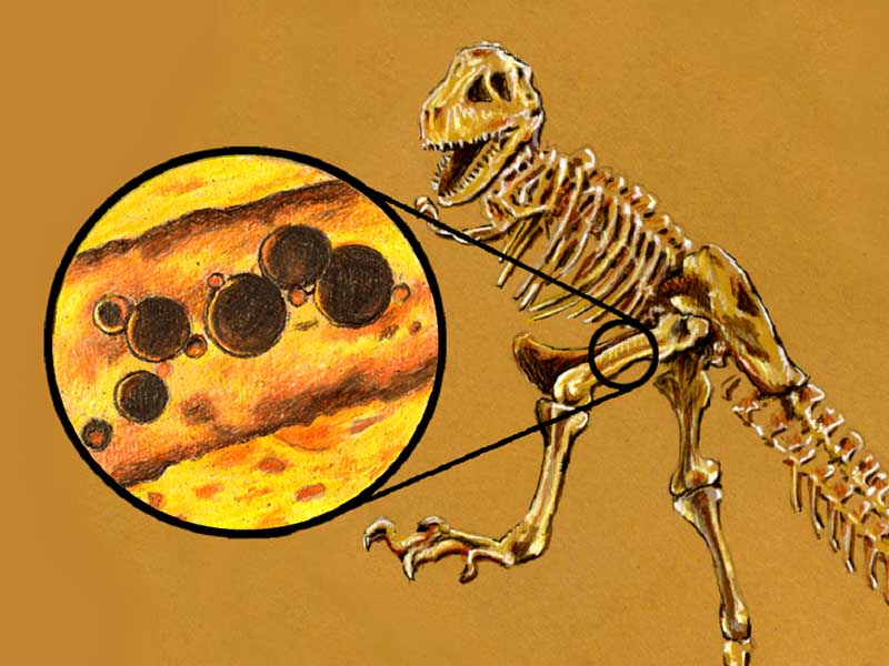 Dinosaurs: Millions of Years or Only Thousands? Creation