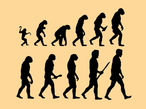 apes to man Human evolution is the evolutionary process that led to the emergence of anatomically modern humans, beginning with the evolutionary history of primates – in particular genus homo – and.