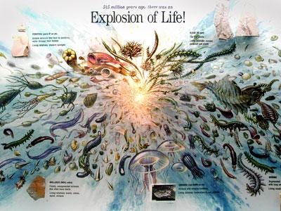 cambrian-explosion-Denver