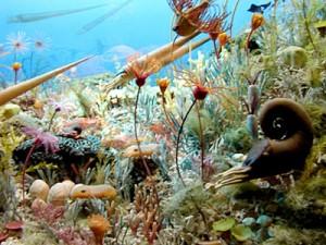 cambrian-sea