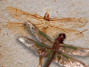 fossil-dragonfly-&-contemporary