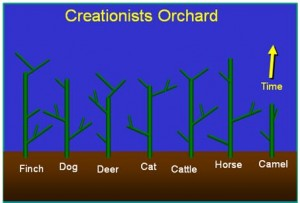 Creationist Orchard